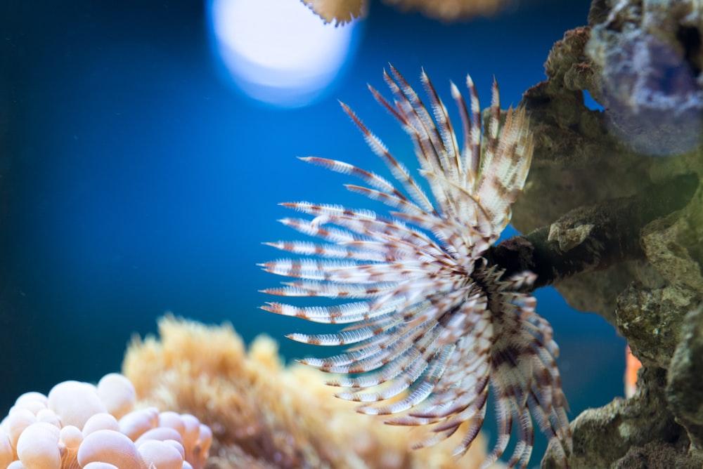 closeup photo of lionfish