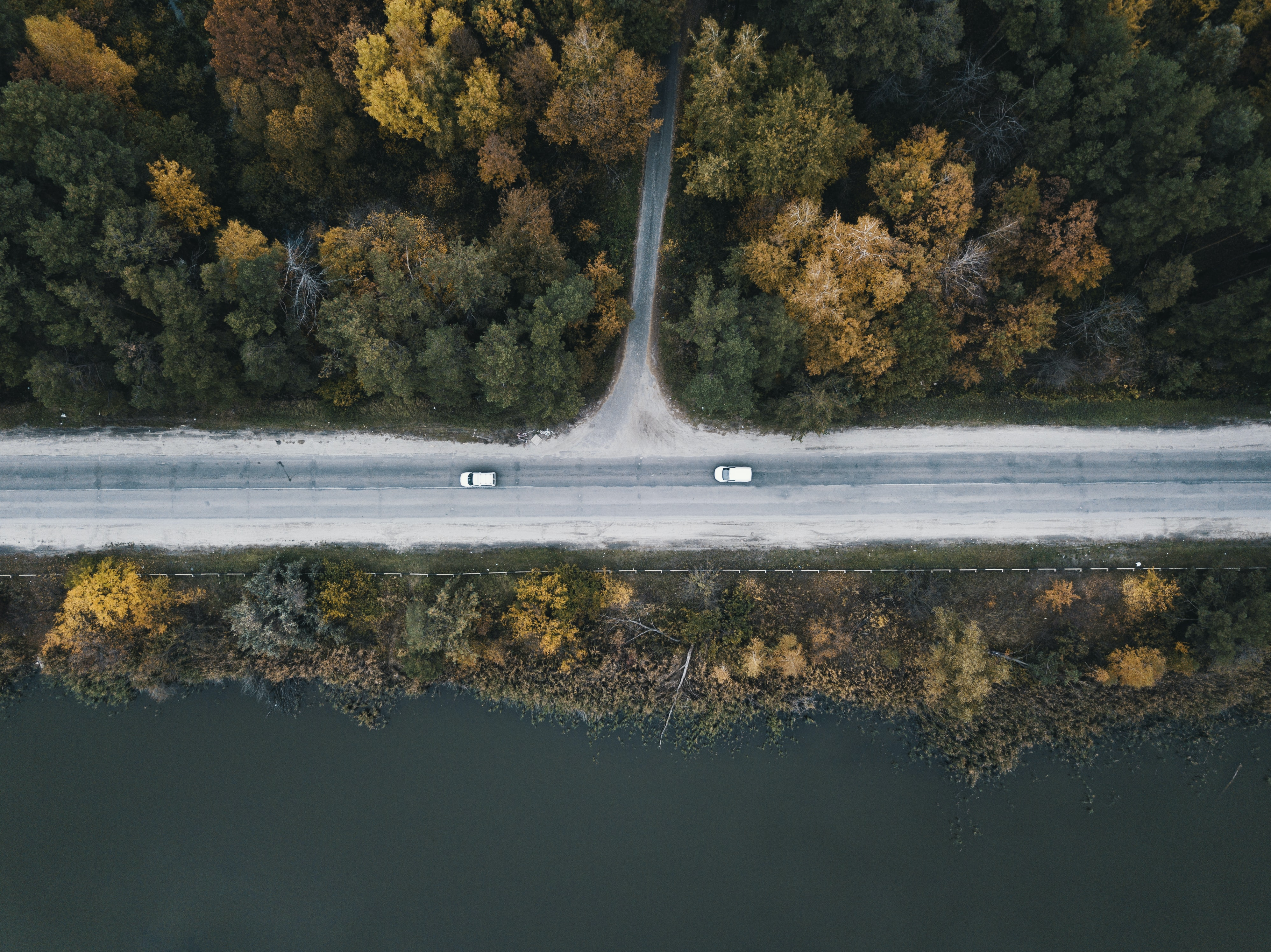 bird's eye view photo of road between green leafed trees
