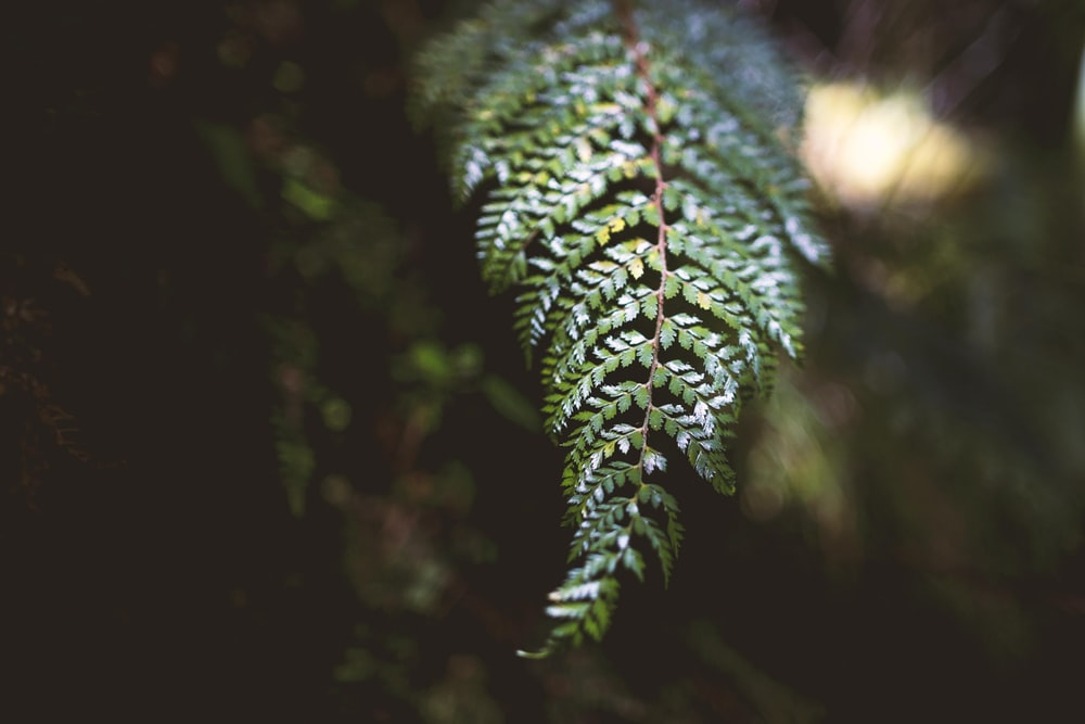 green fern leaf in selective focus photography