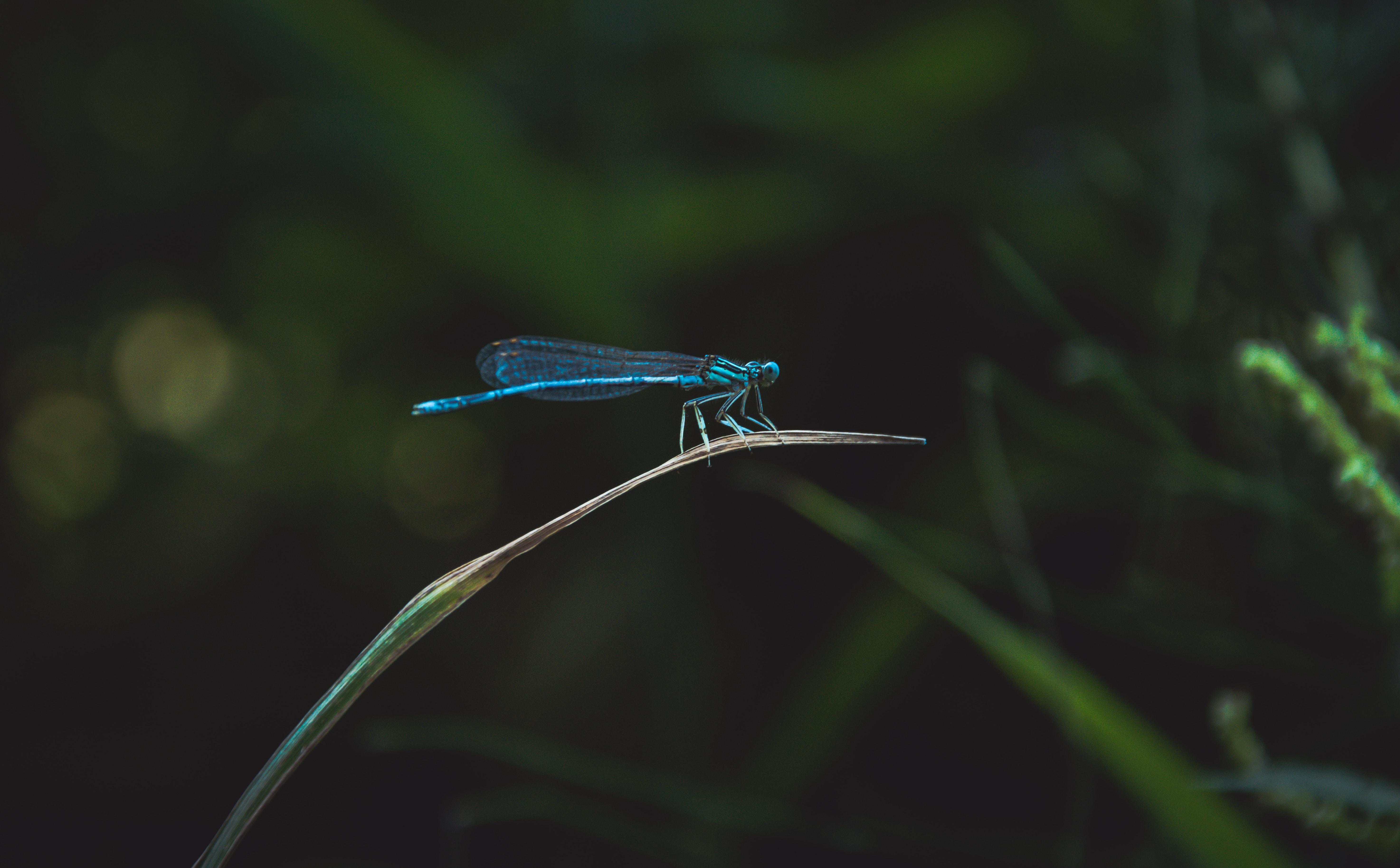 blue dragonfly on green grass leaf