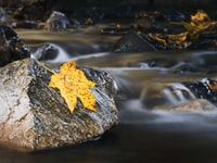 time lapse photography of stream and yellow maple leaf on gray rock