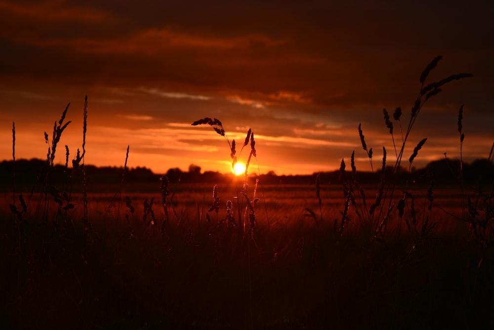 sunset view on farm field
