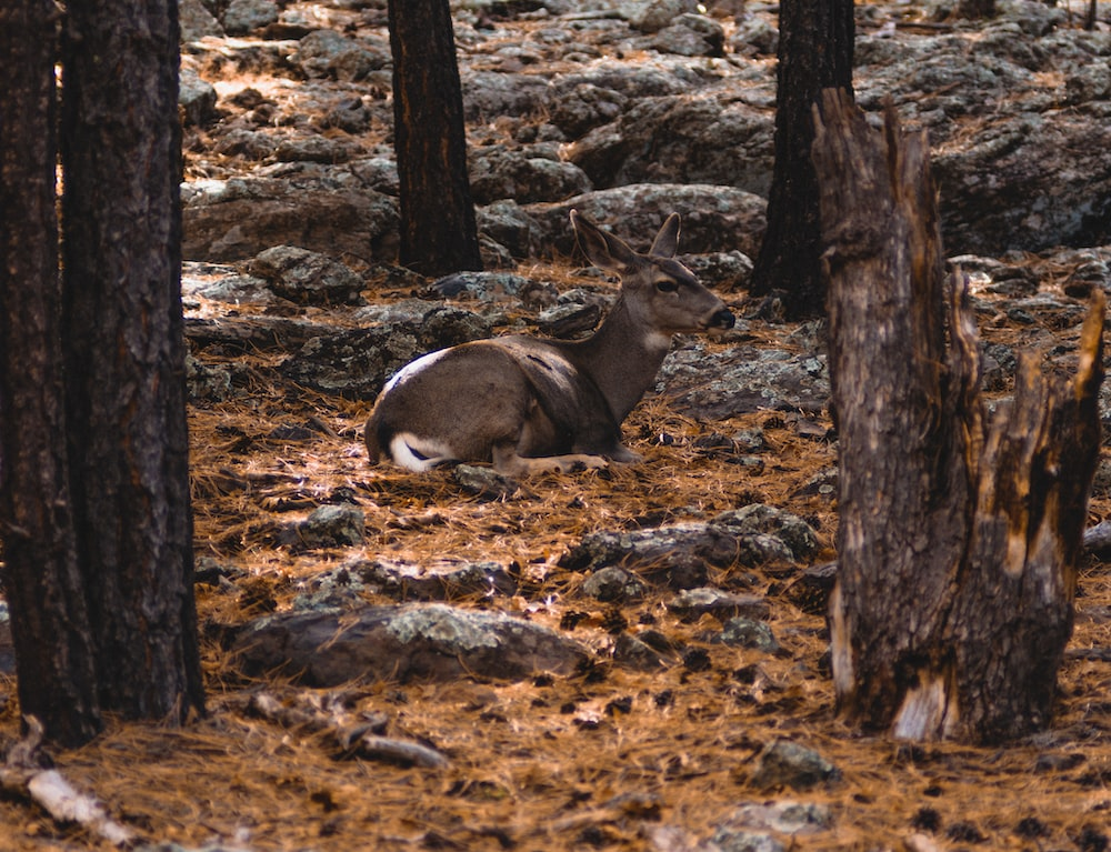 deer lying on ground