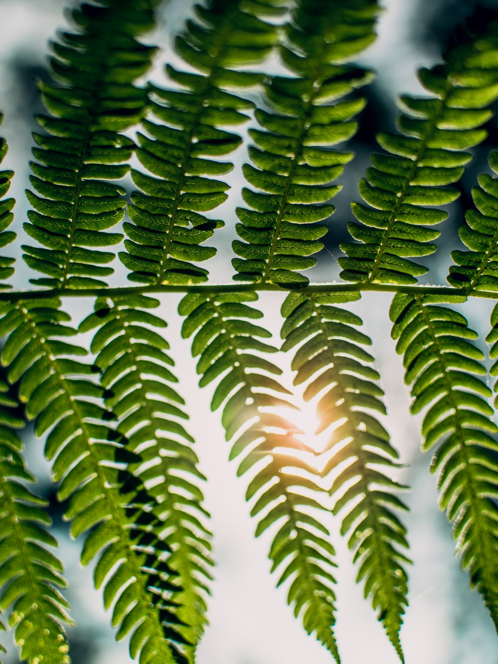 shallow focus photography of sunlight passing through fern plant