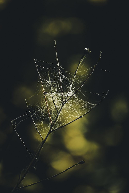 macro photography of spider web