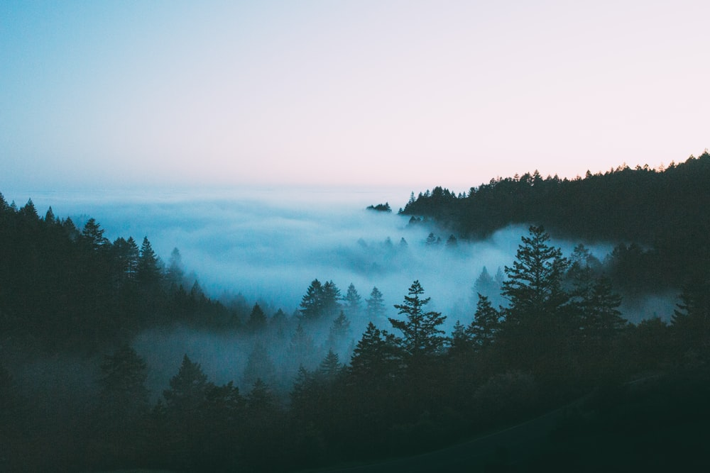bird's-eye view photography of foggy forest