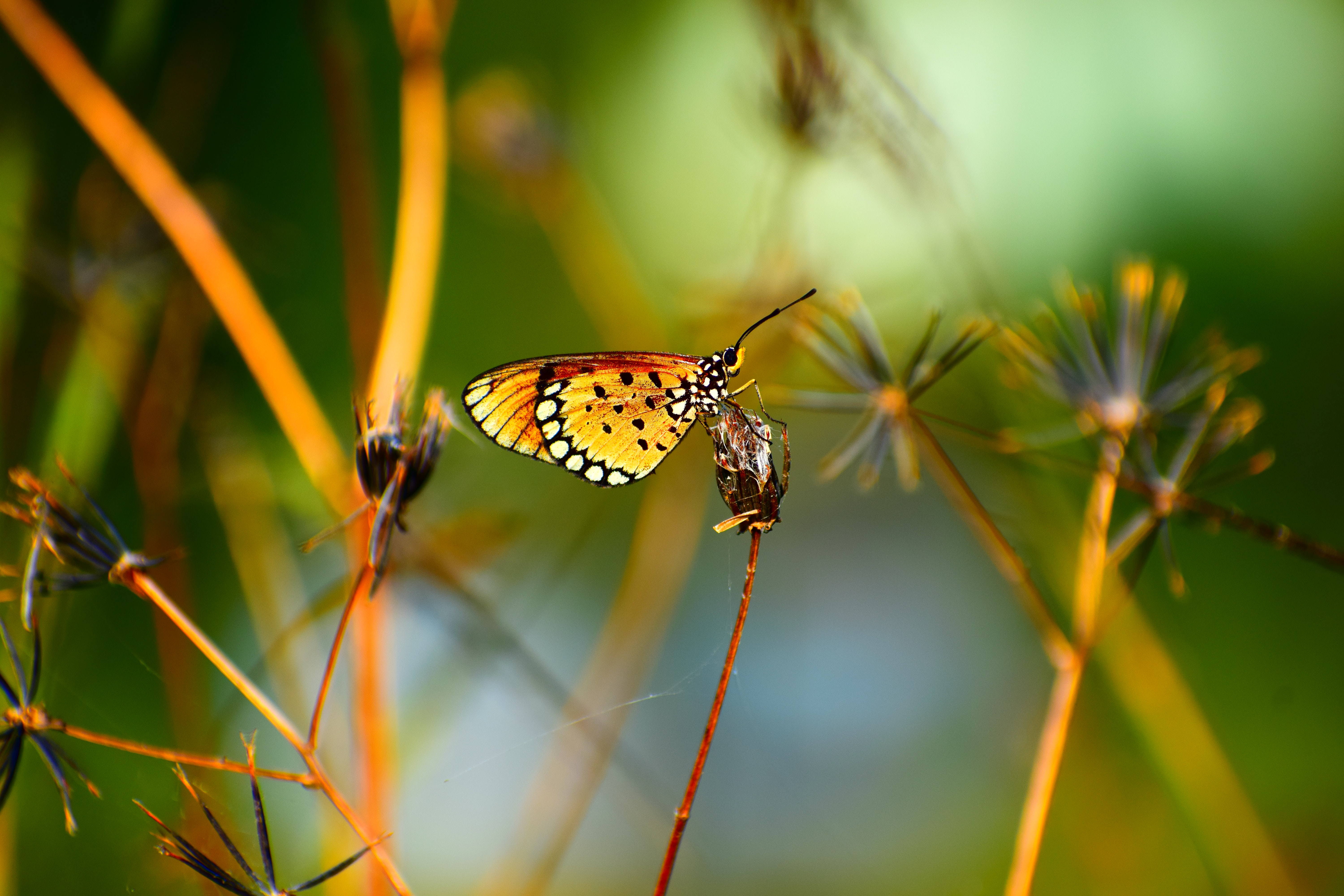 macro photography of yellow butterfly