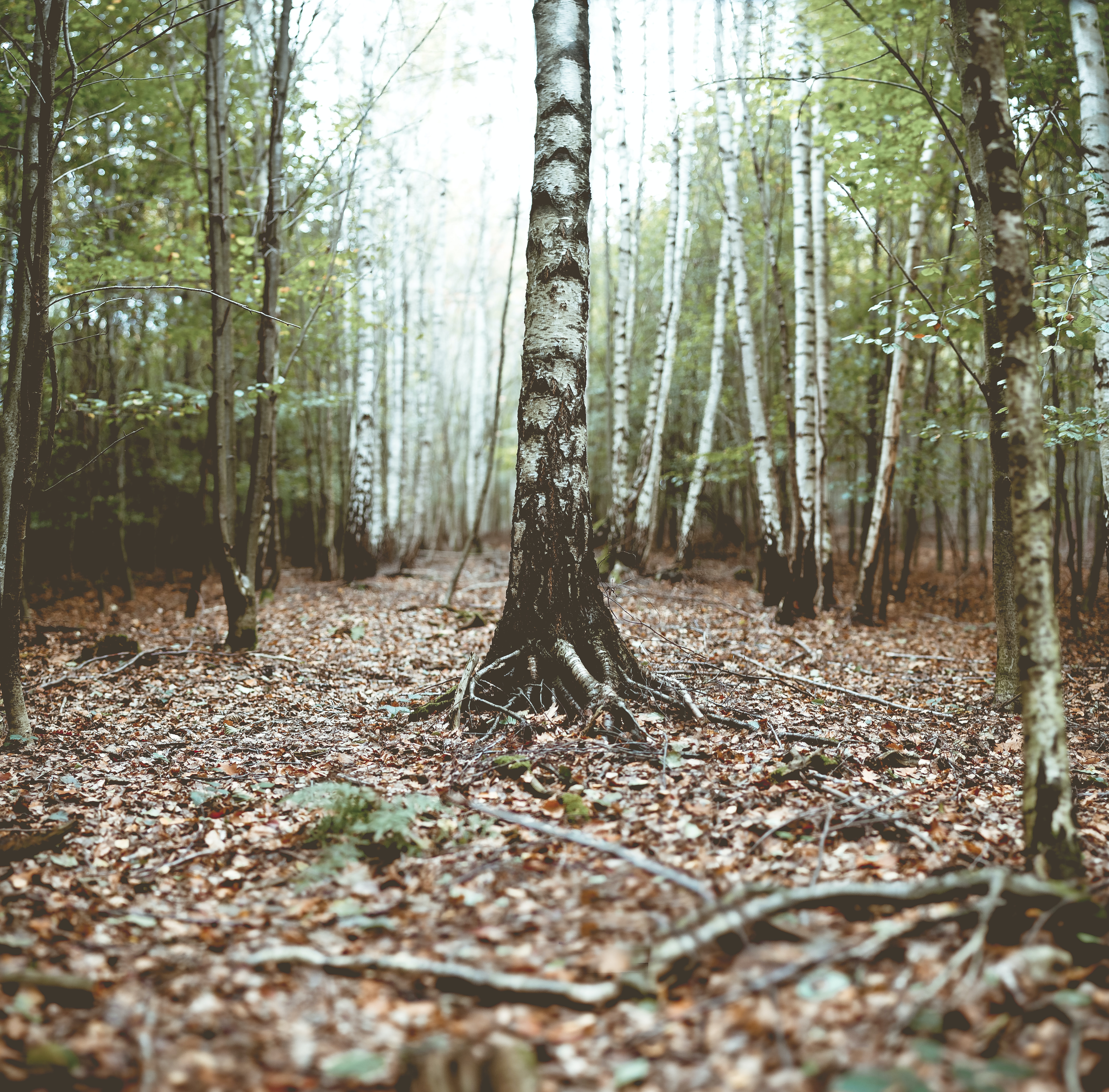 photo of tree trunks