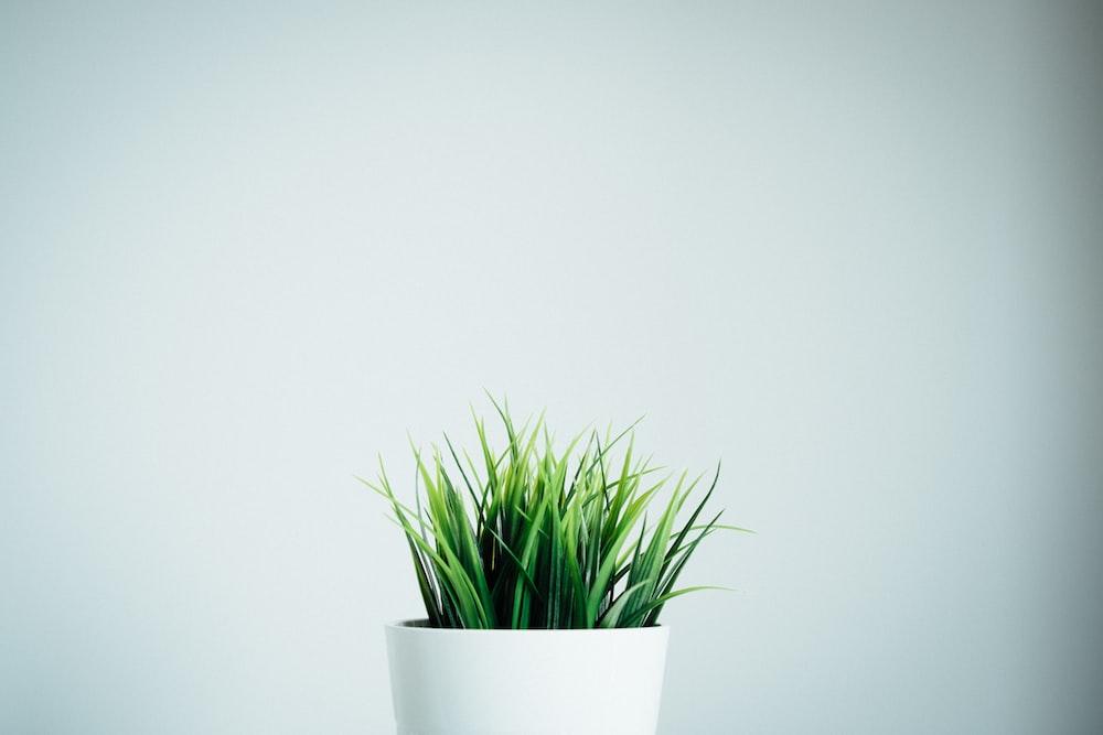 green leafed plants in white ceramic vase