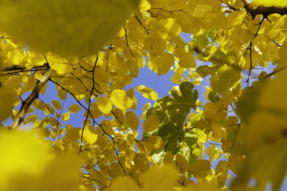 yellow leafed tree during daytime