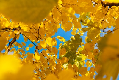 yellow leafed tree during daytime yellow zoom background