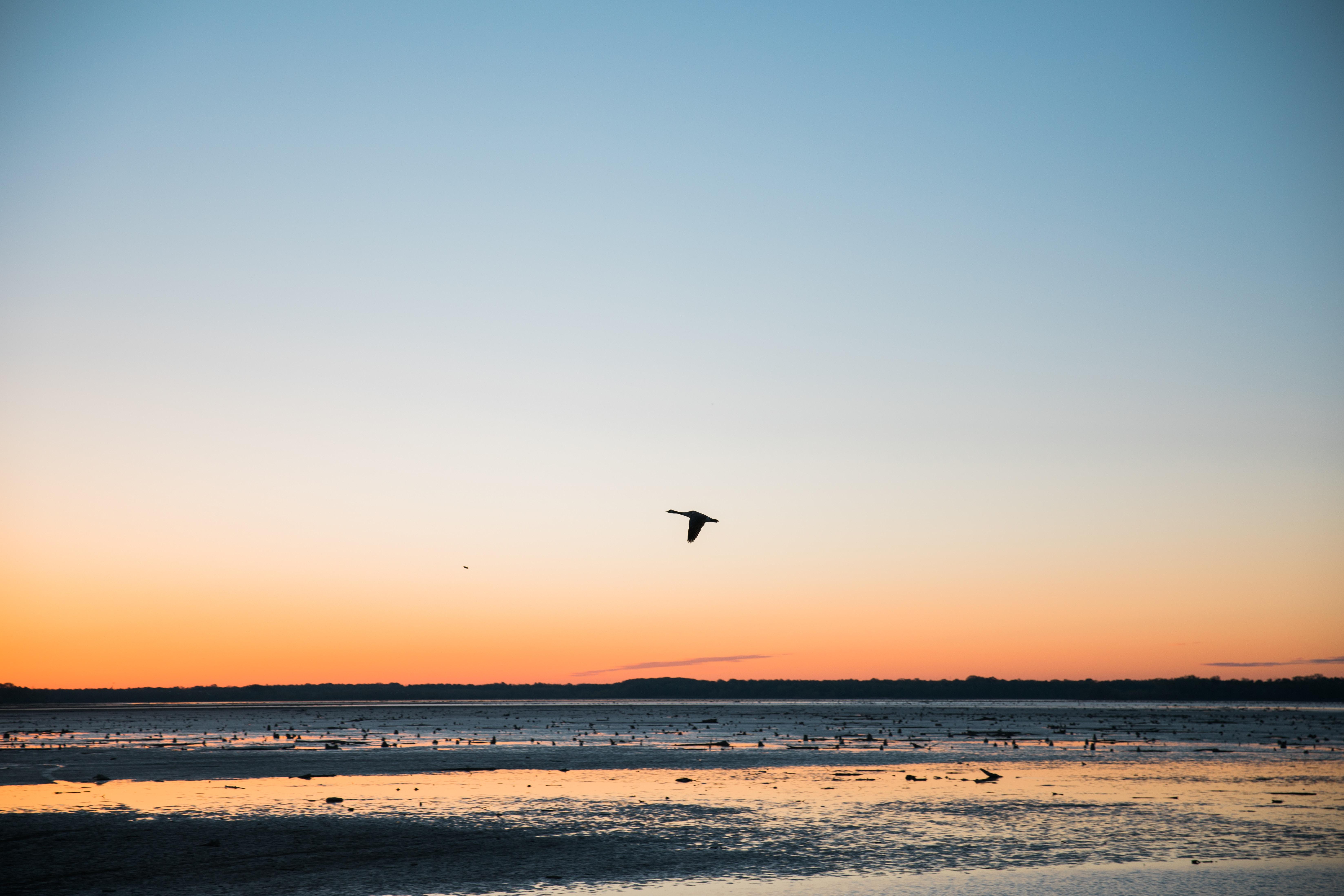 flying bird over body of water under blue sky
