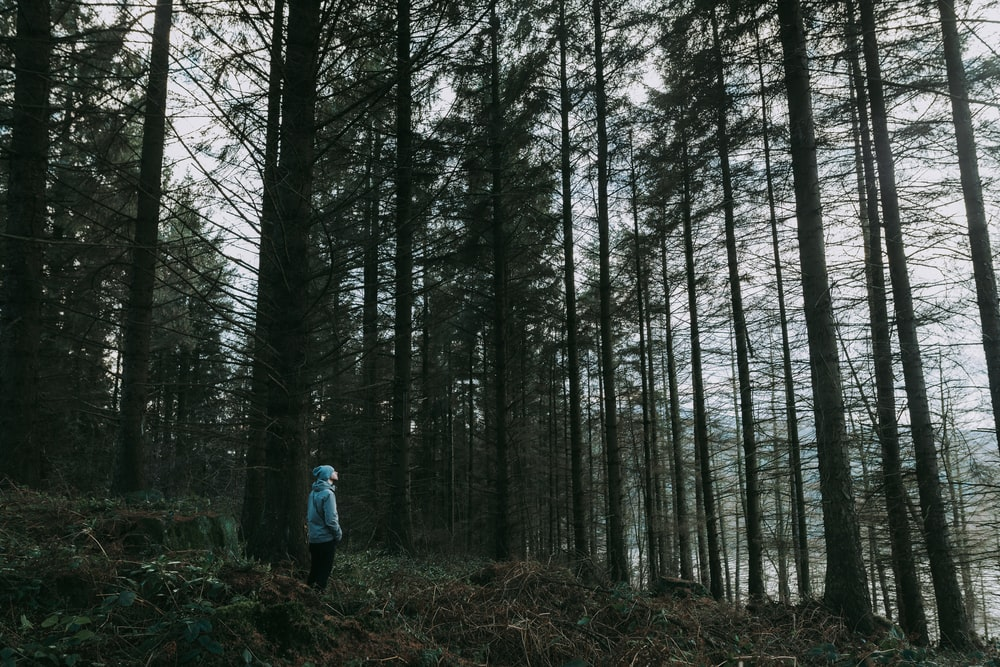 person standing on forest during daytime