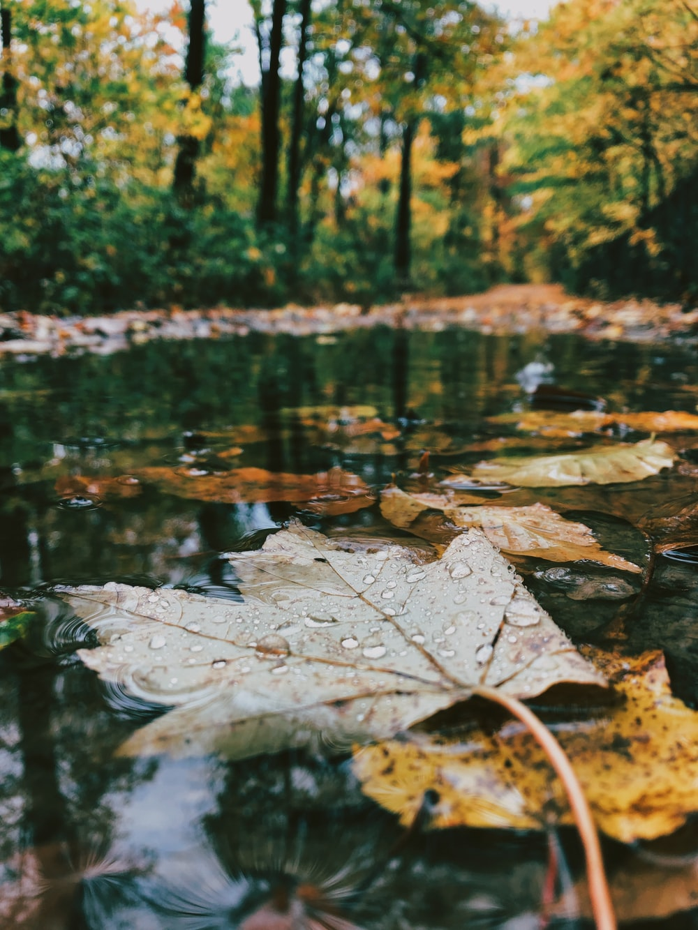 selective photo of leaves in body of water