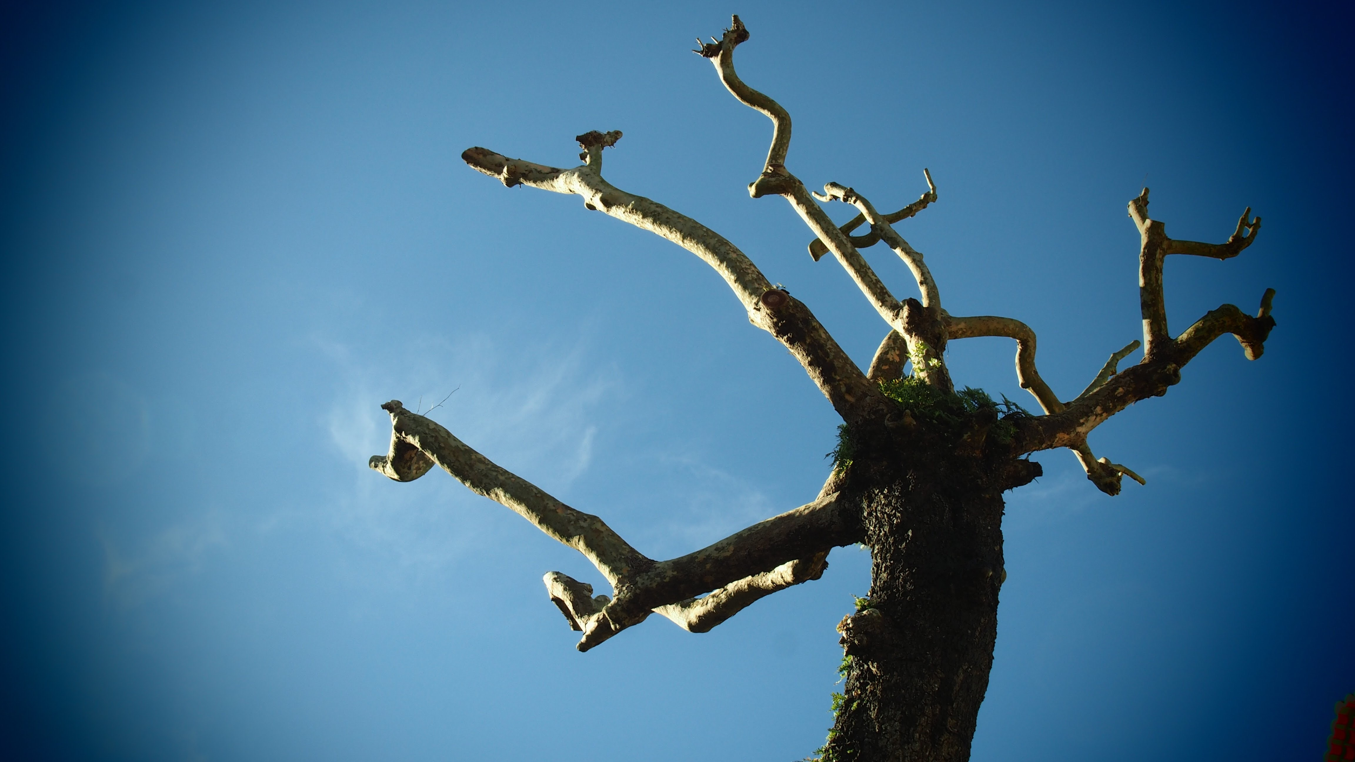 brown barked tree low angle photography