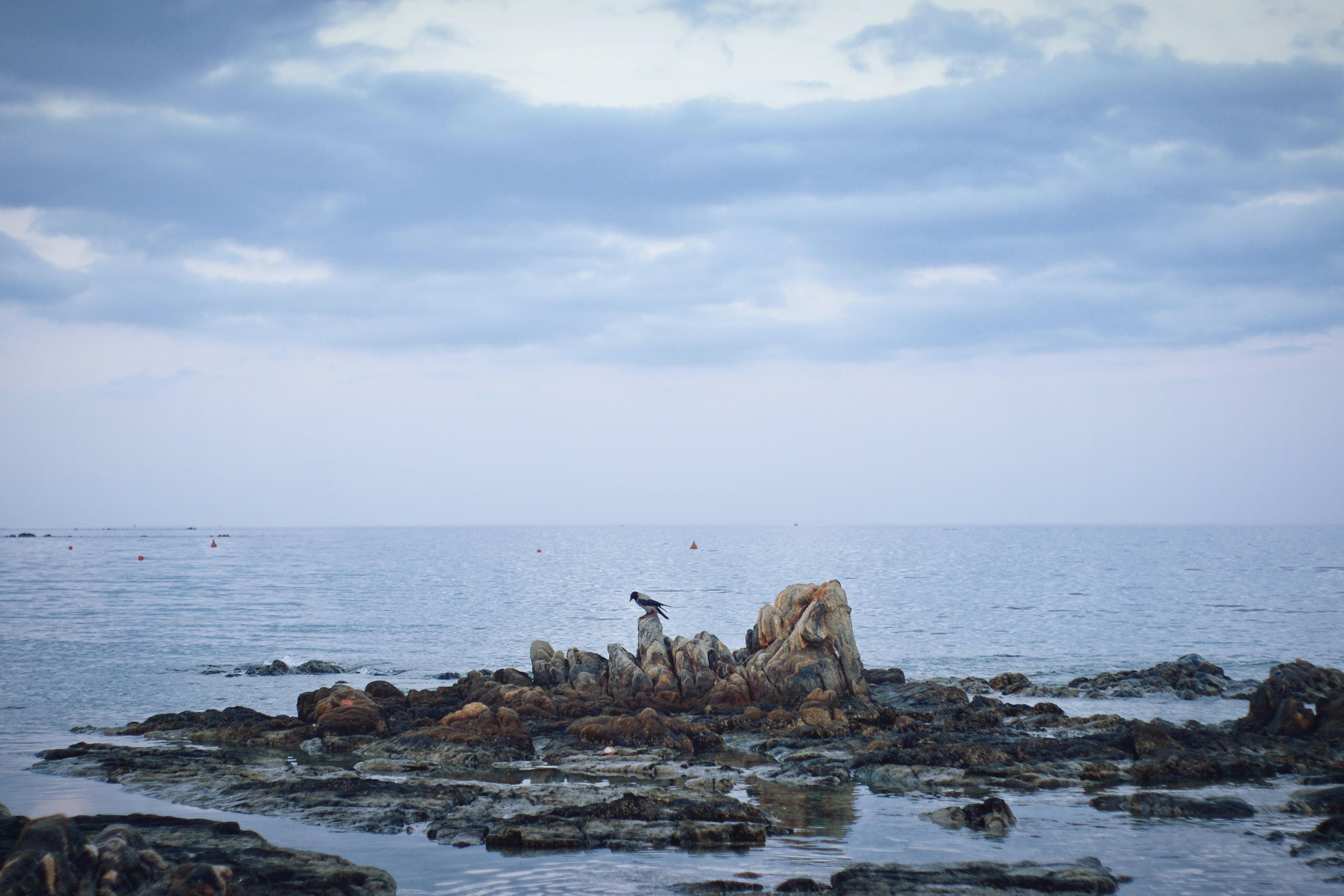 bird standing on stone under cloudy sky