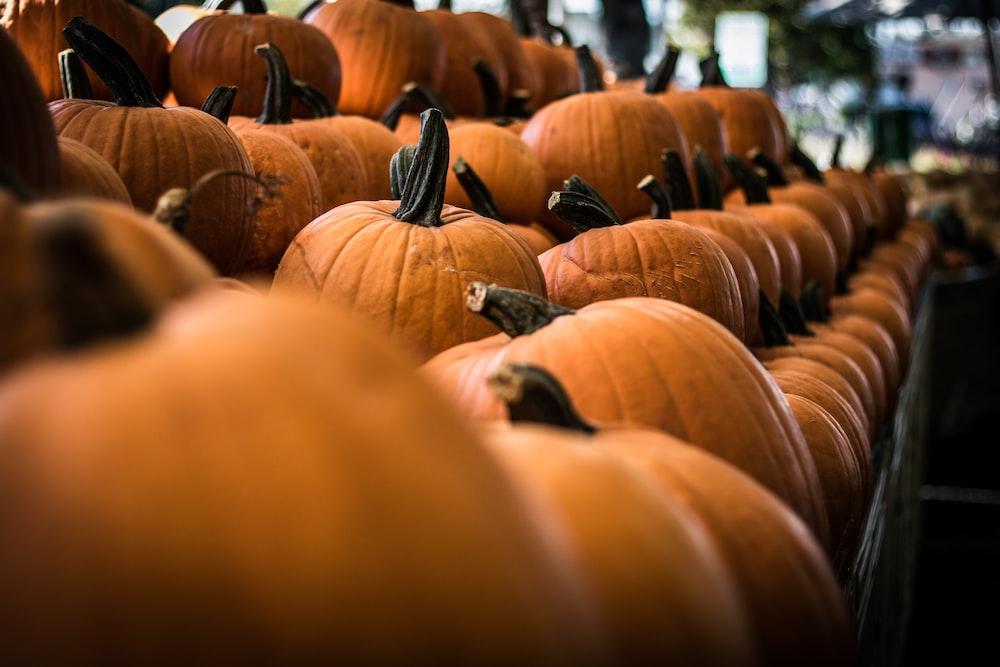 selective focus photography of pumpkin on shelf