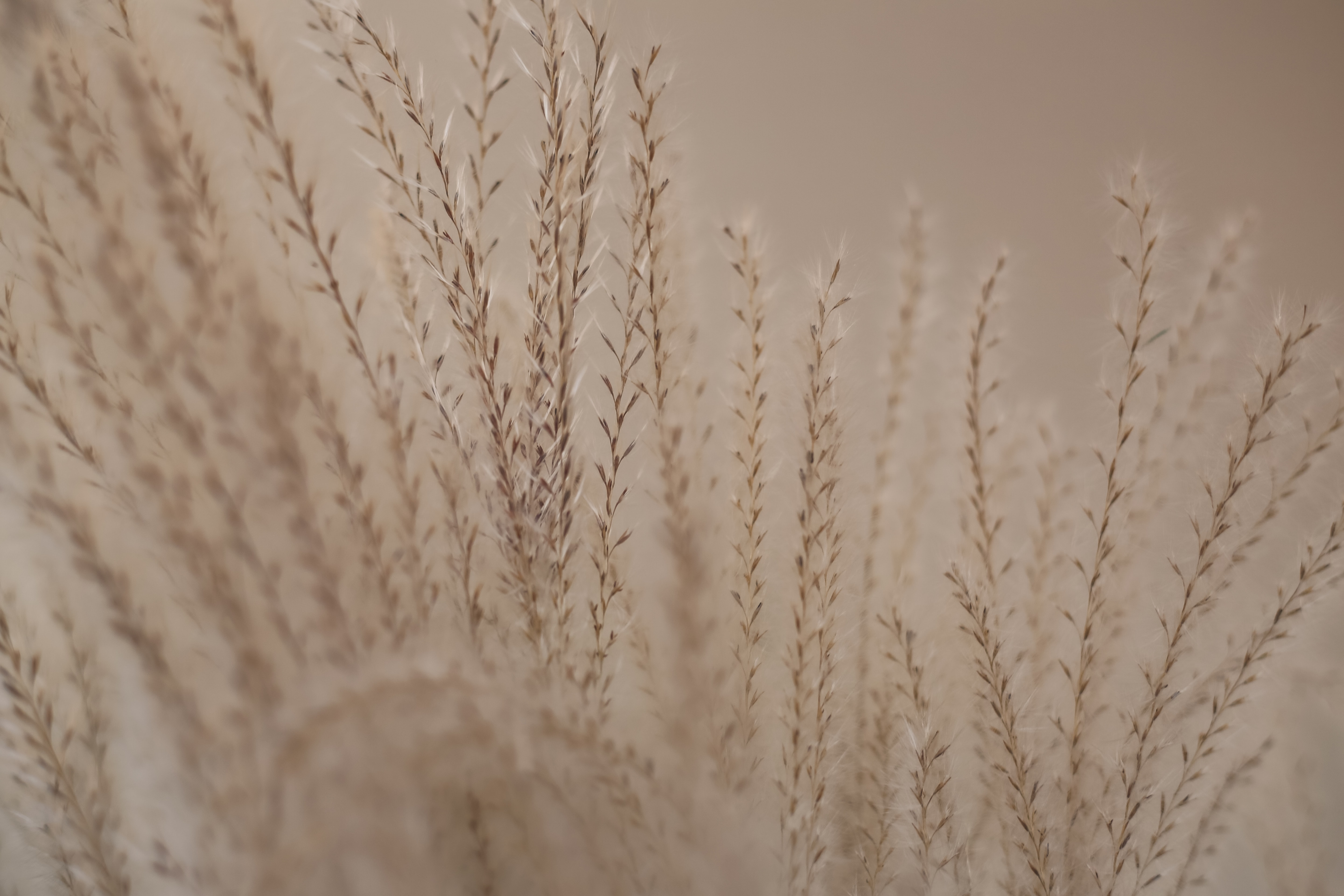 shallow focus photography of brown plants