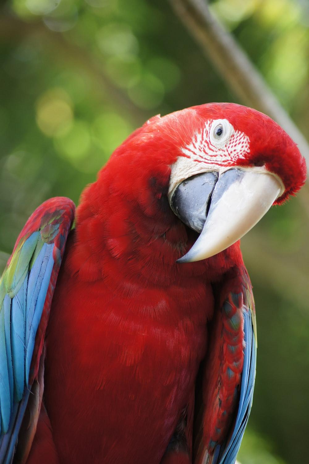 closeup photo of scarlet macaw