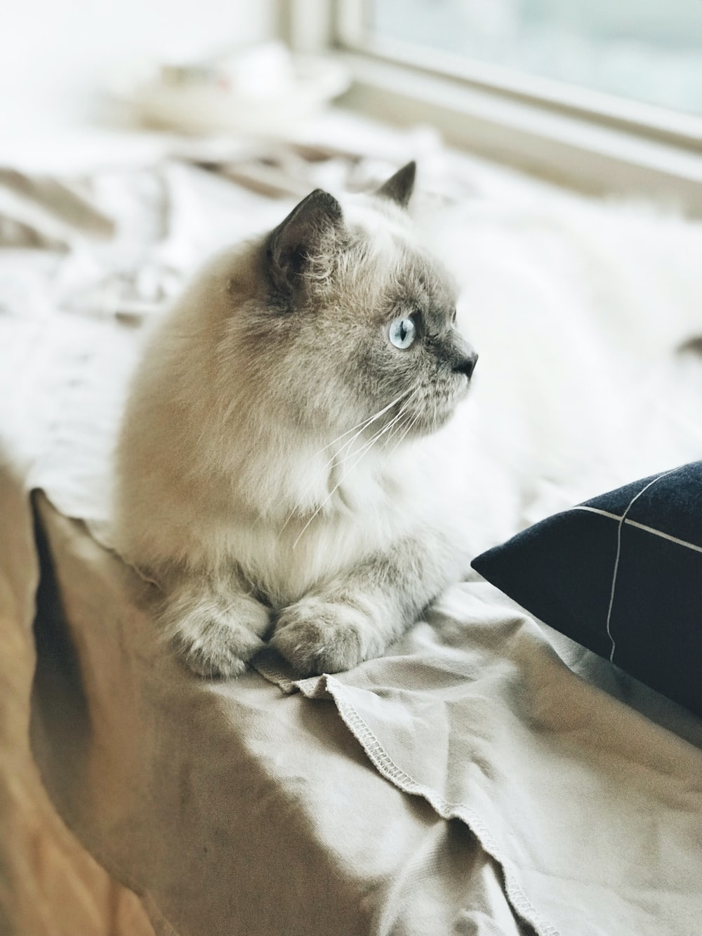 tilt-shift photography of kitten near window