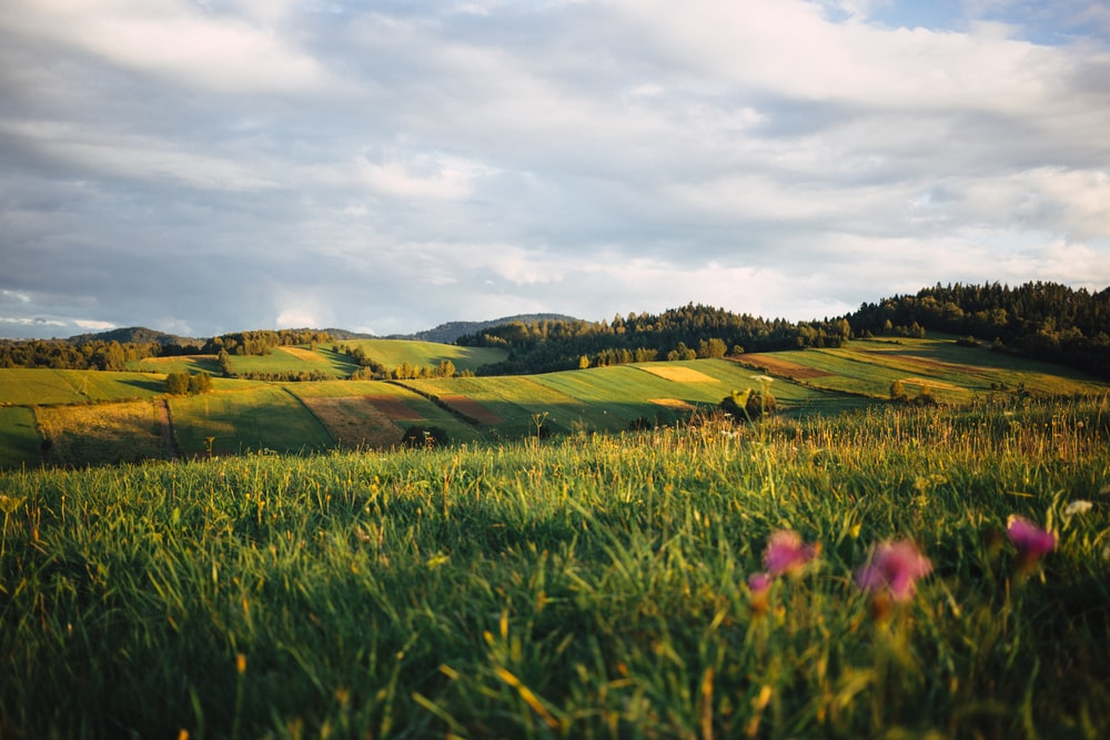 green field plains under cloudy sky