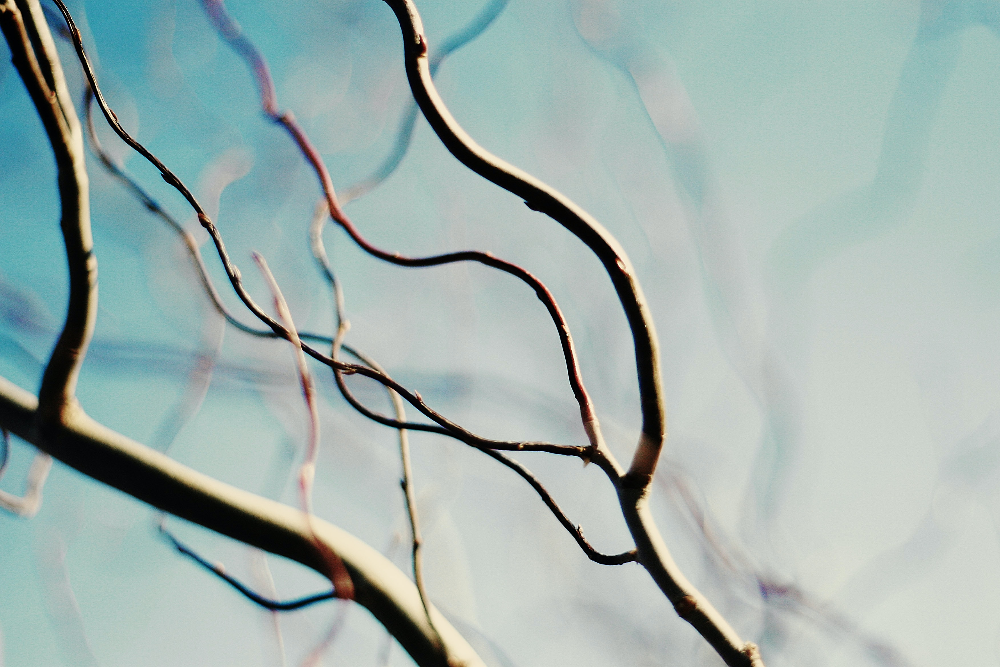 close up photo of tree branch
