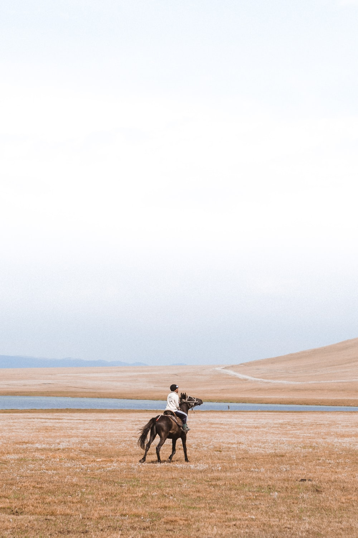 man riding horse on grass field
