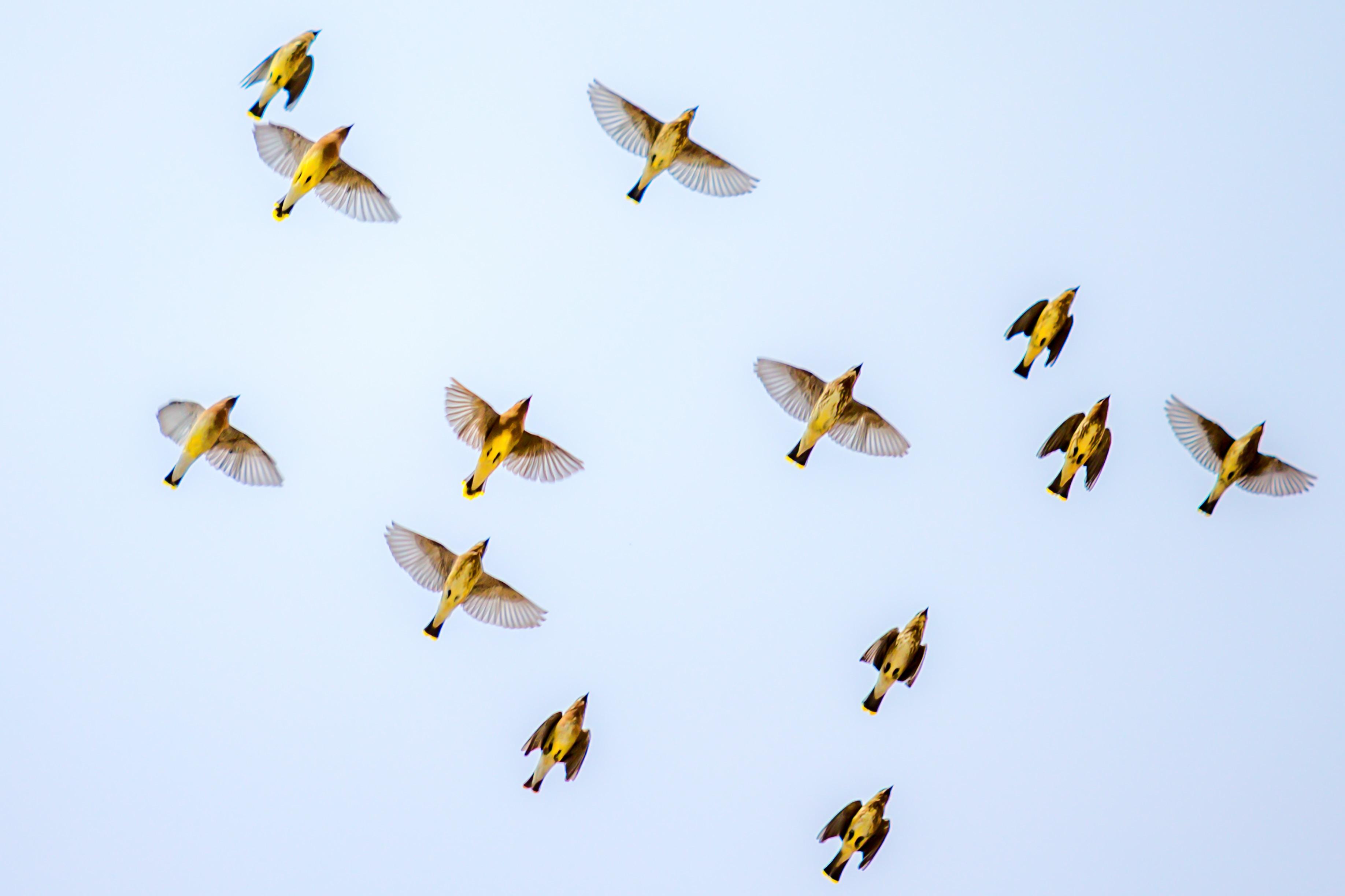 flock of birds flying on sky
