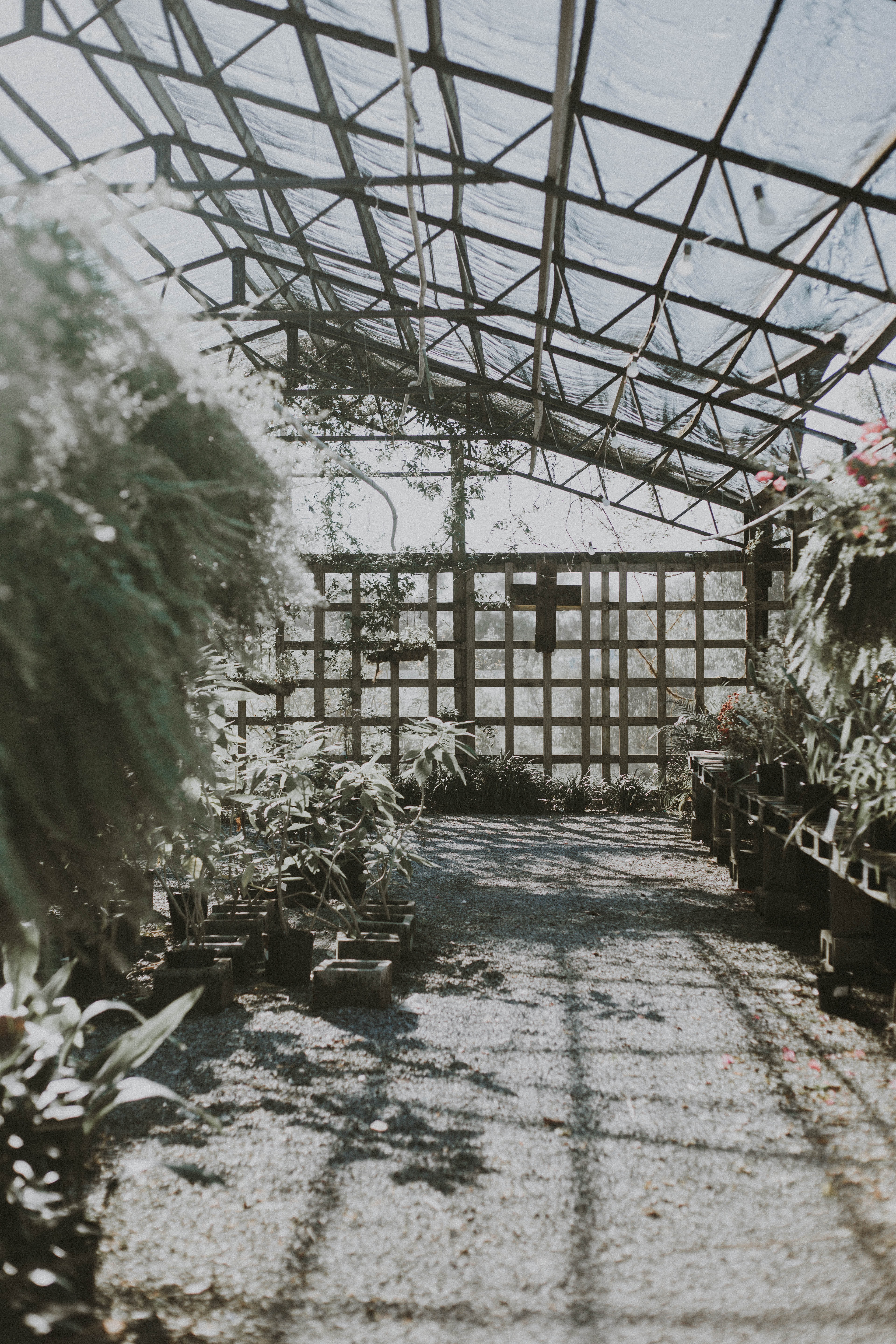 grayscale photography of greenhouse