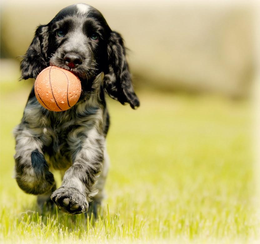 dog biting a dog toy
