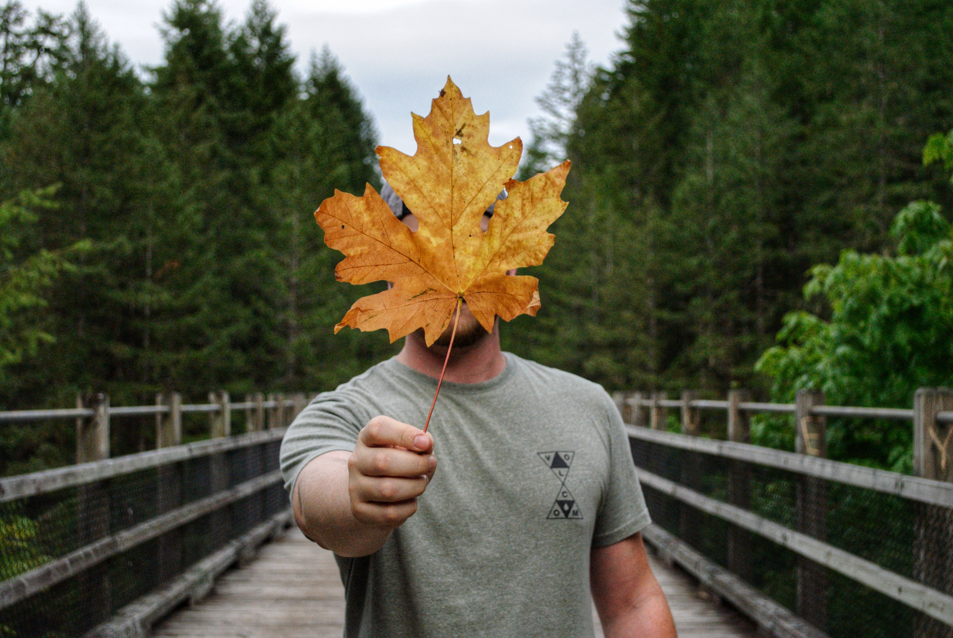 man in grey shirt holding brown leaf