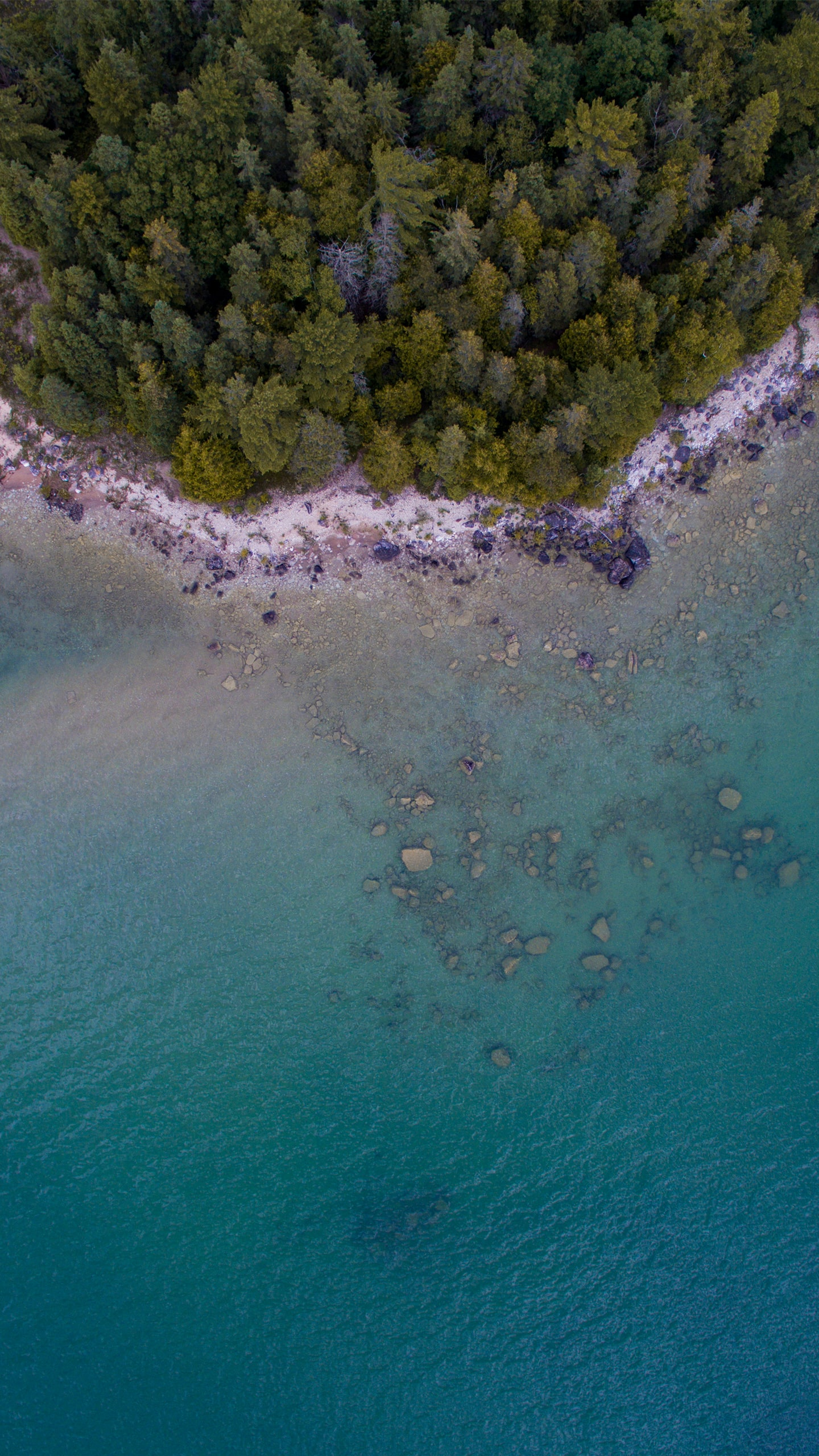 aerial photography of forest beside body of water at daytime