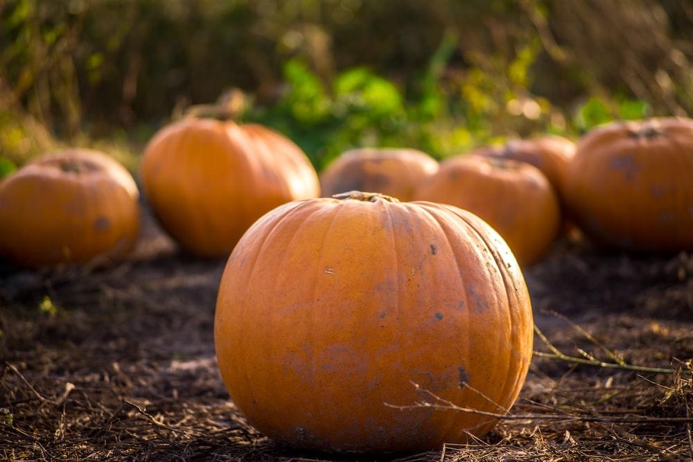 pumpkin on gray soil