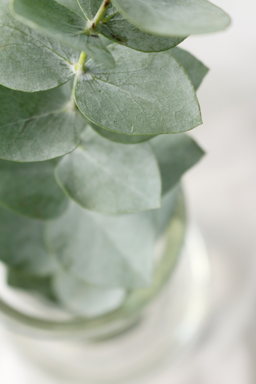 shallow focus photography of oregano plant