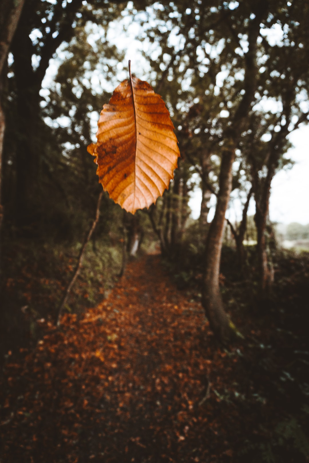 I was on this little path and I wanted to do some film shot. And I had an idea, I took this leaf, setup my camera to burst mode and Boom I took this shot.