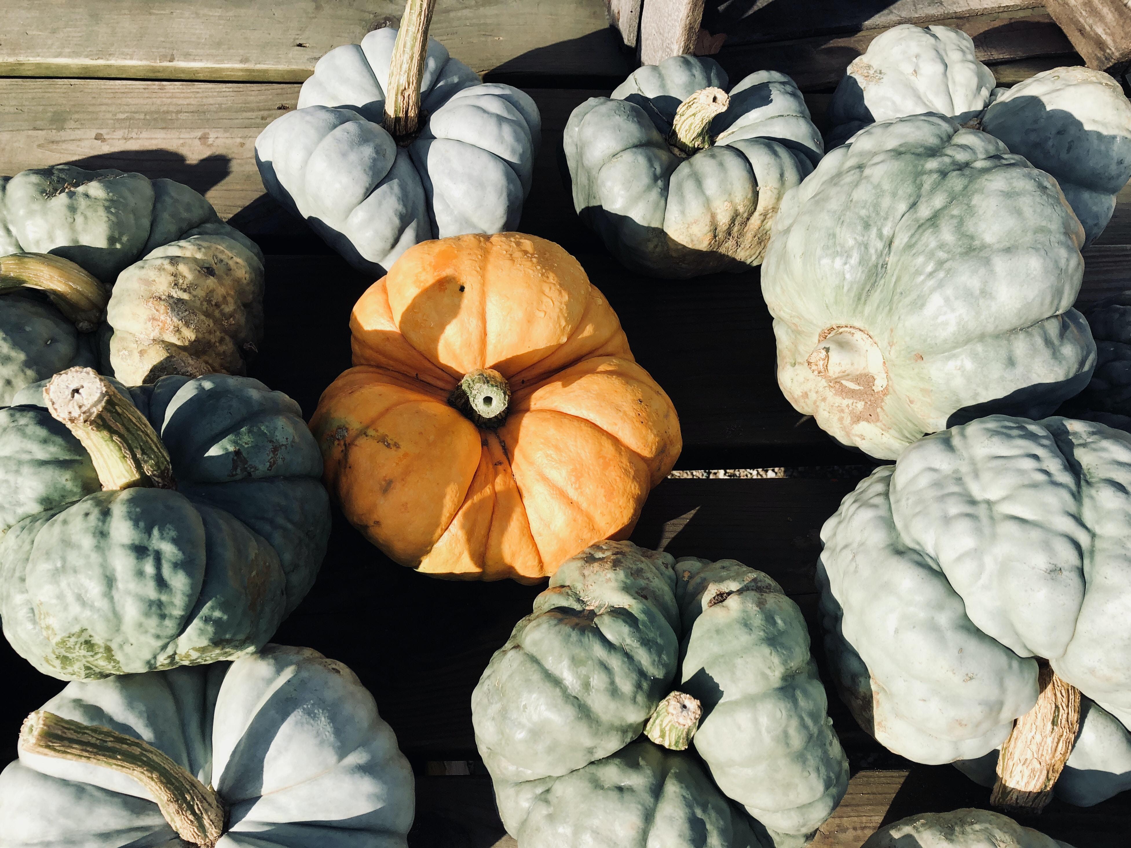 green and orange squash lot