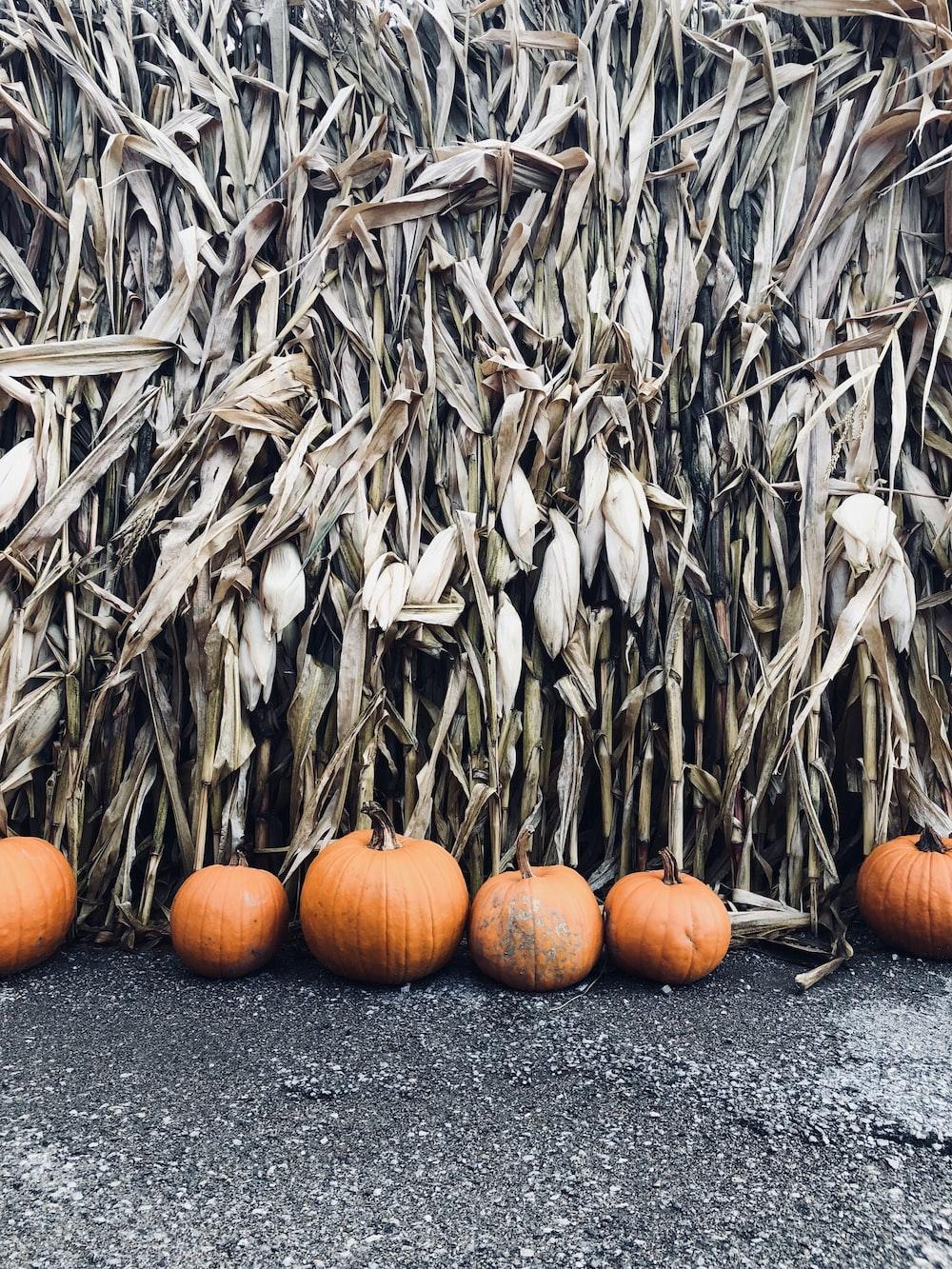 photo of pumpkin near grass