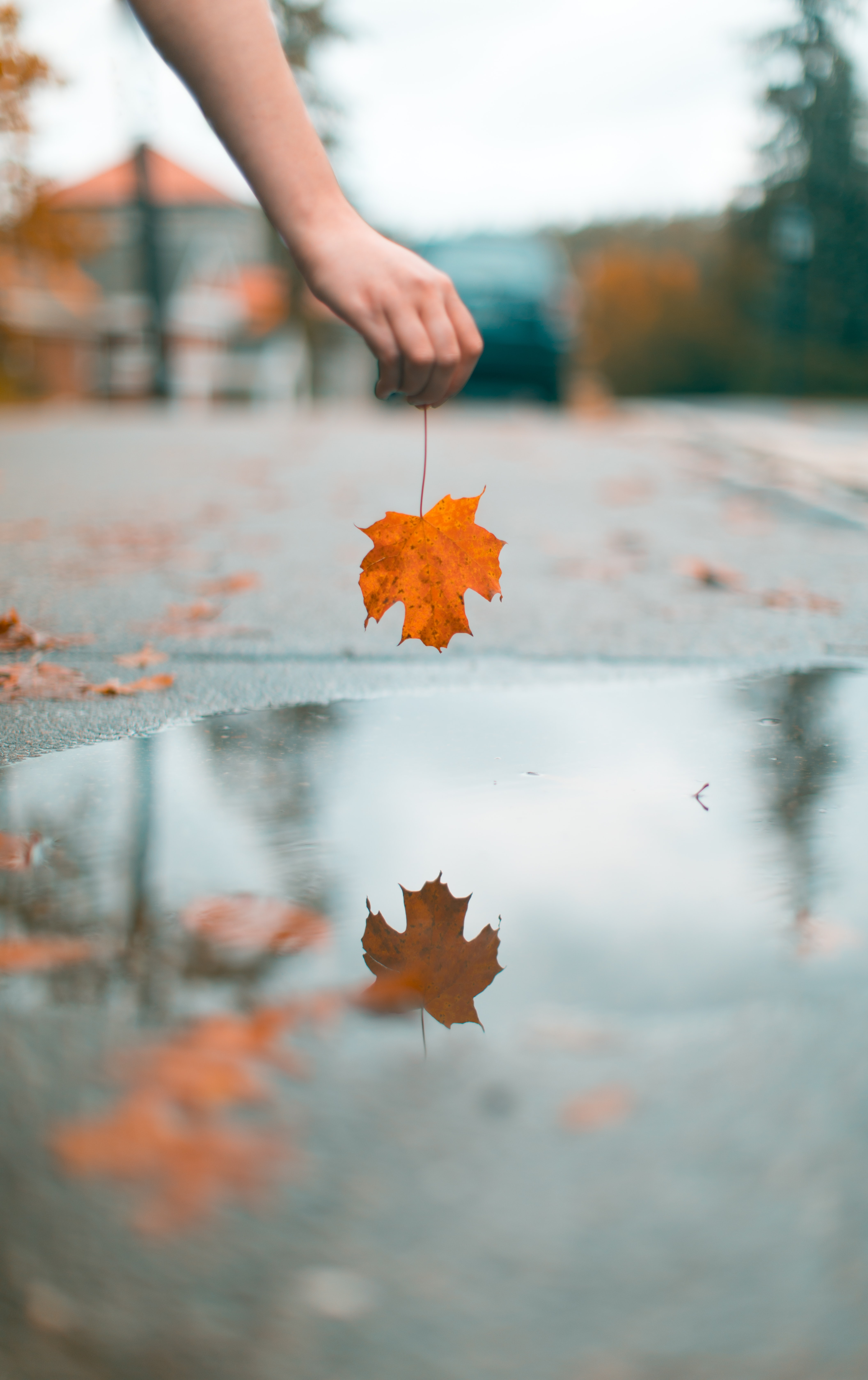 person holding maple leaf above water