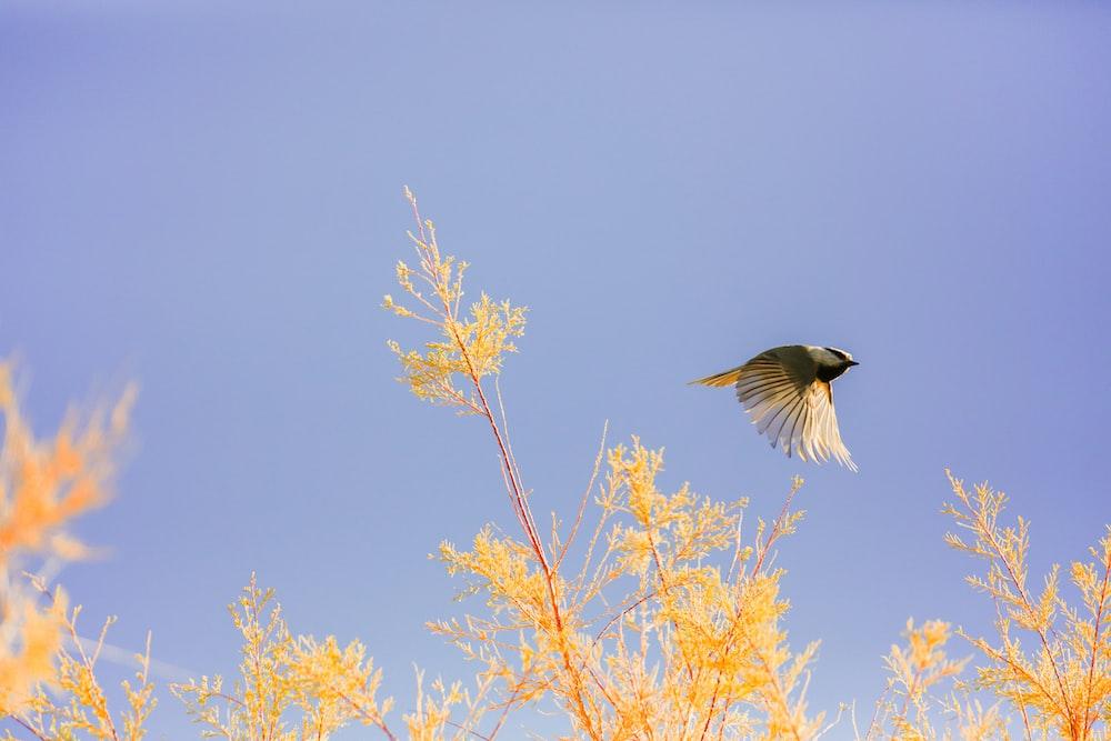 bird in flight over the plants