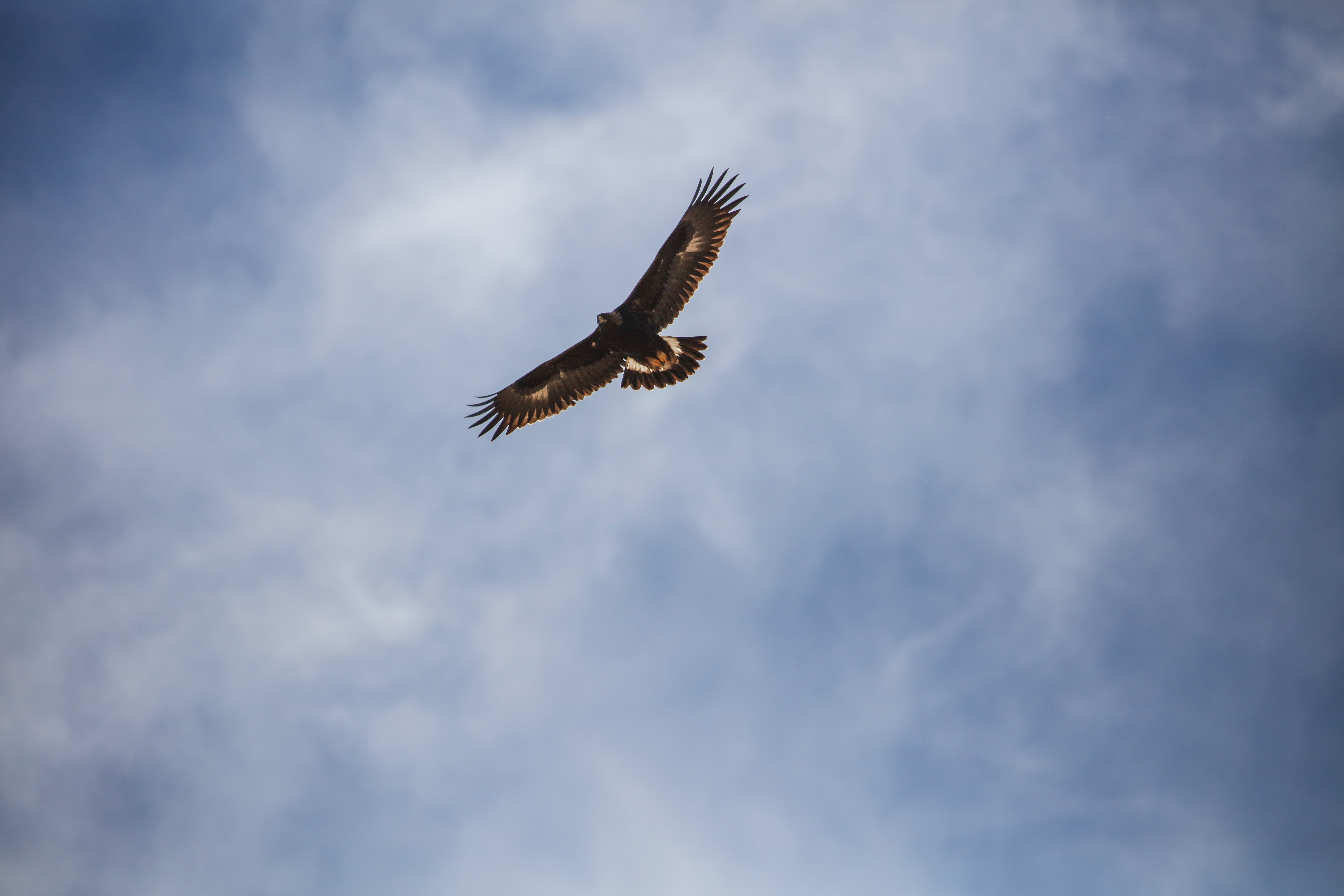 low angle photo of brown hawk flying at daytime