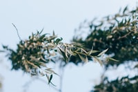 selective focus of green leafed plant surrounded by snow
