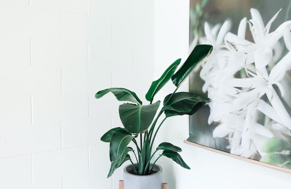 green leafed plant on white ceramic vase