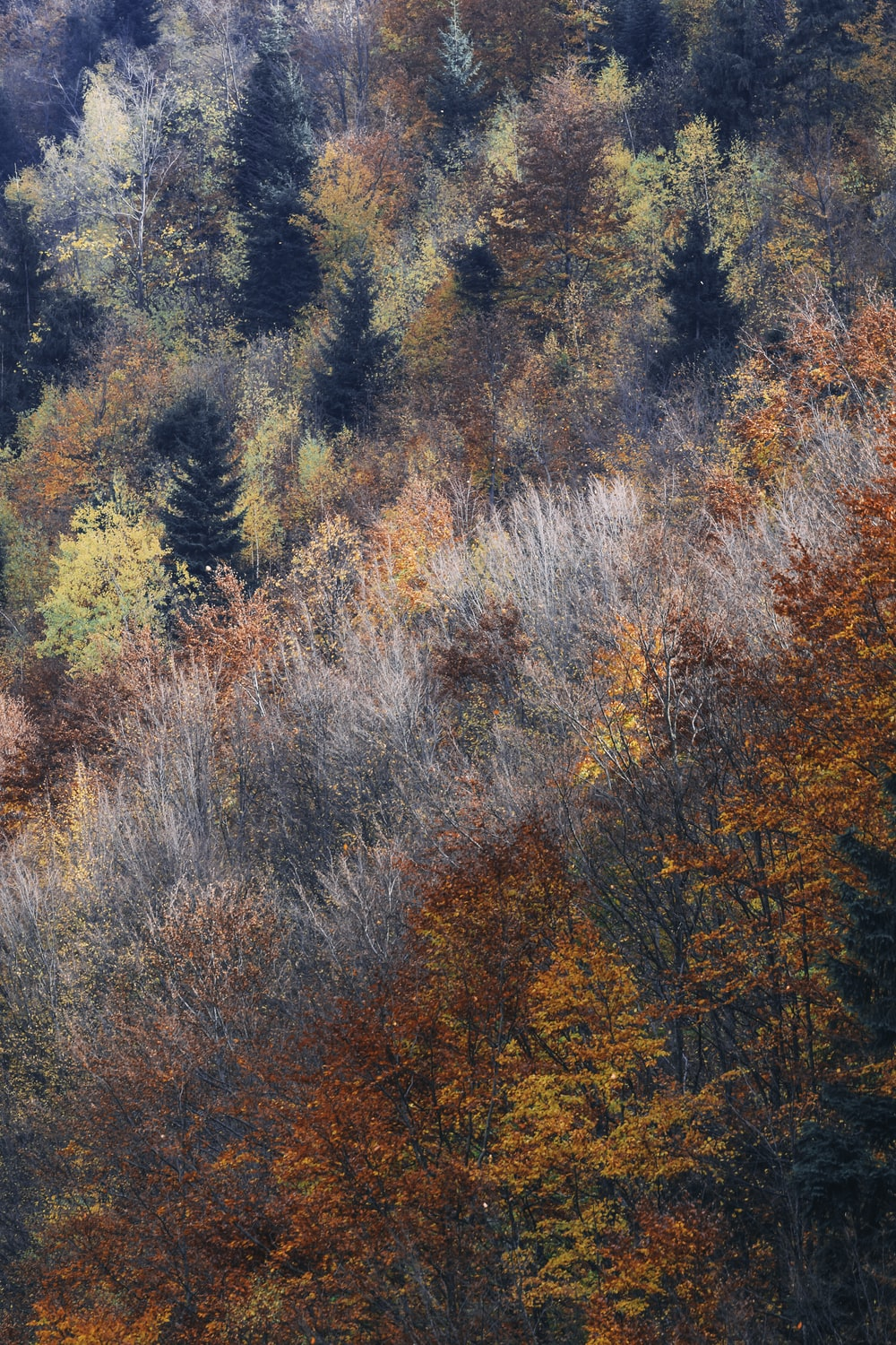 assorted-color leaf tall trees