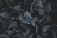 grayscale of plant leaves