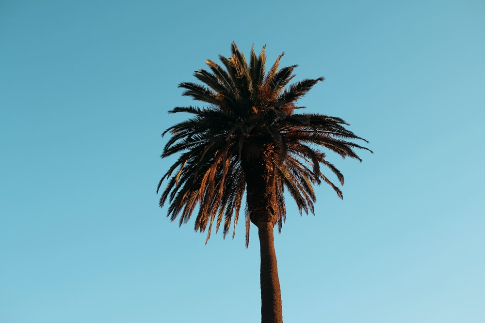green and black palm plant