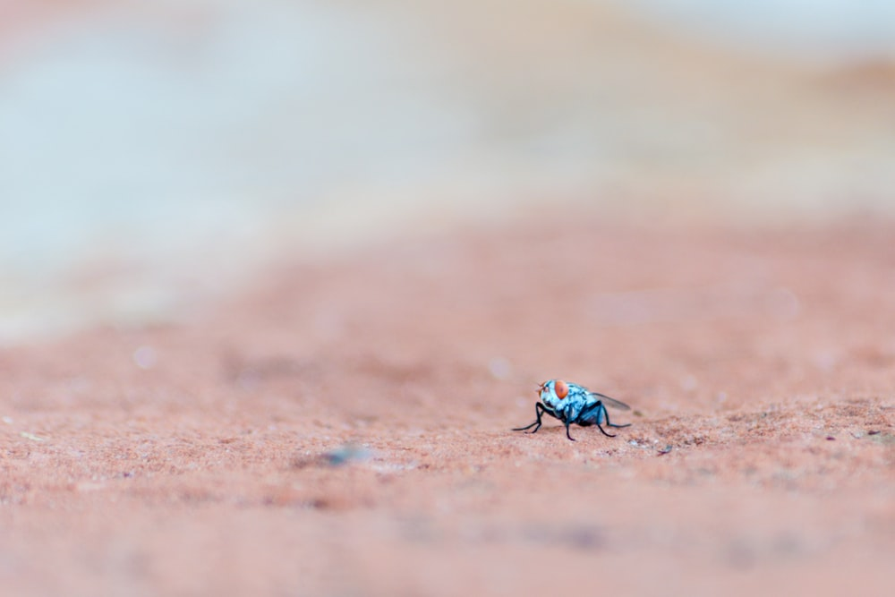 selective focus photography of blue and orange insect on ground