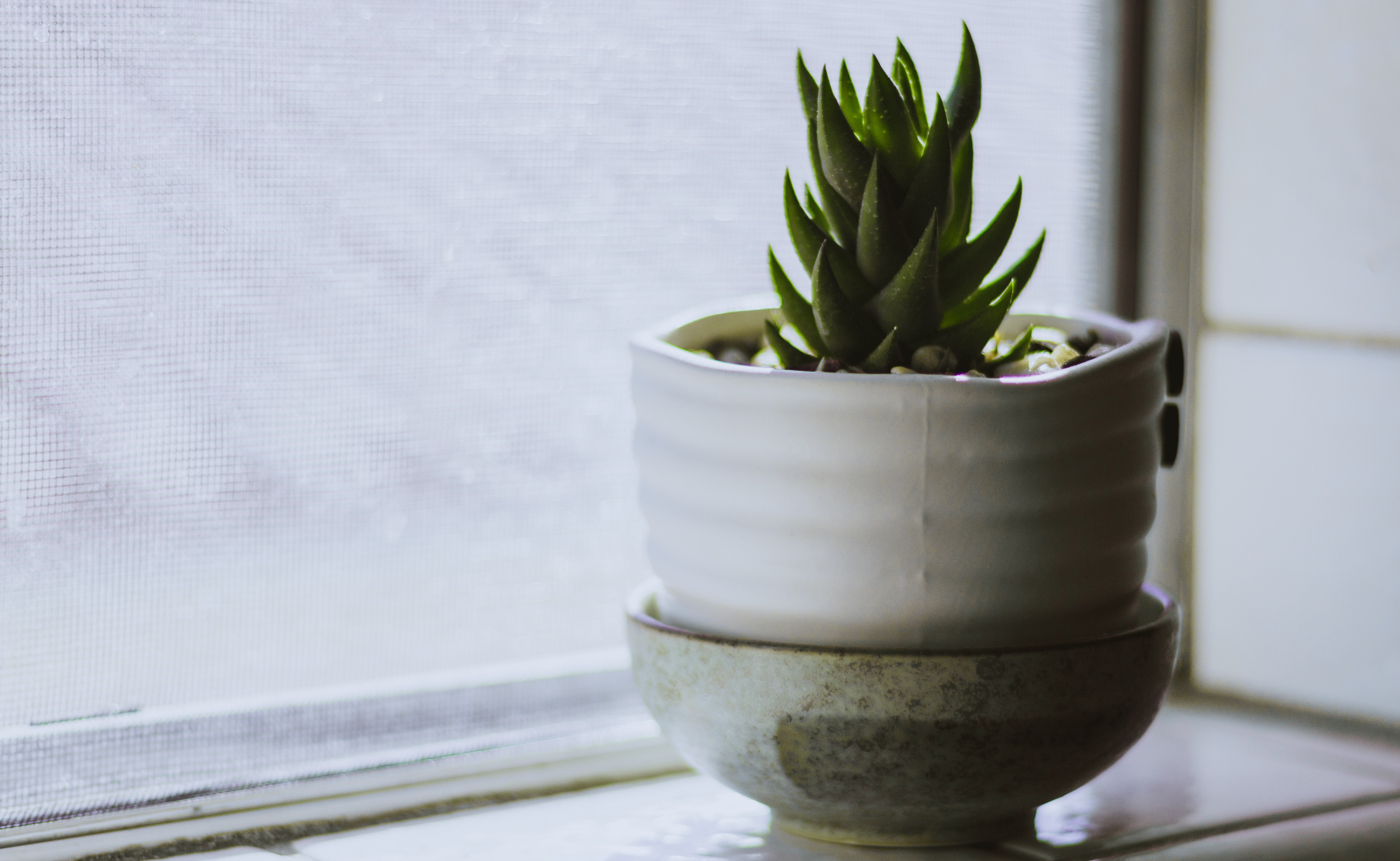 green plant on white ceramic vase