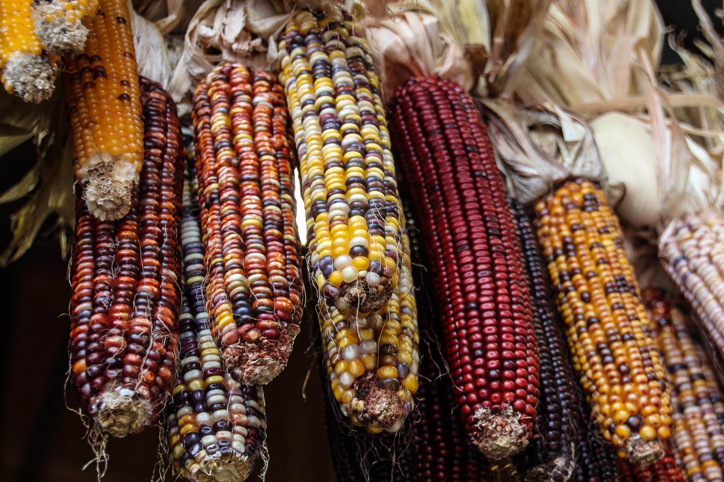 photo of peeled corns