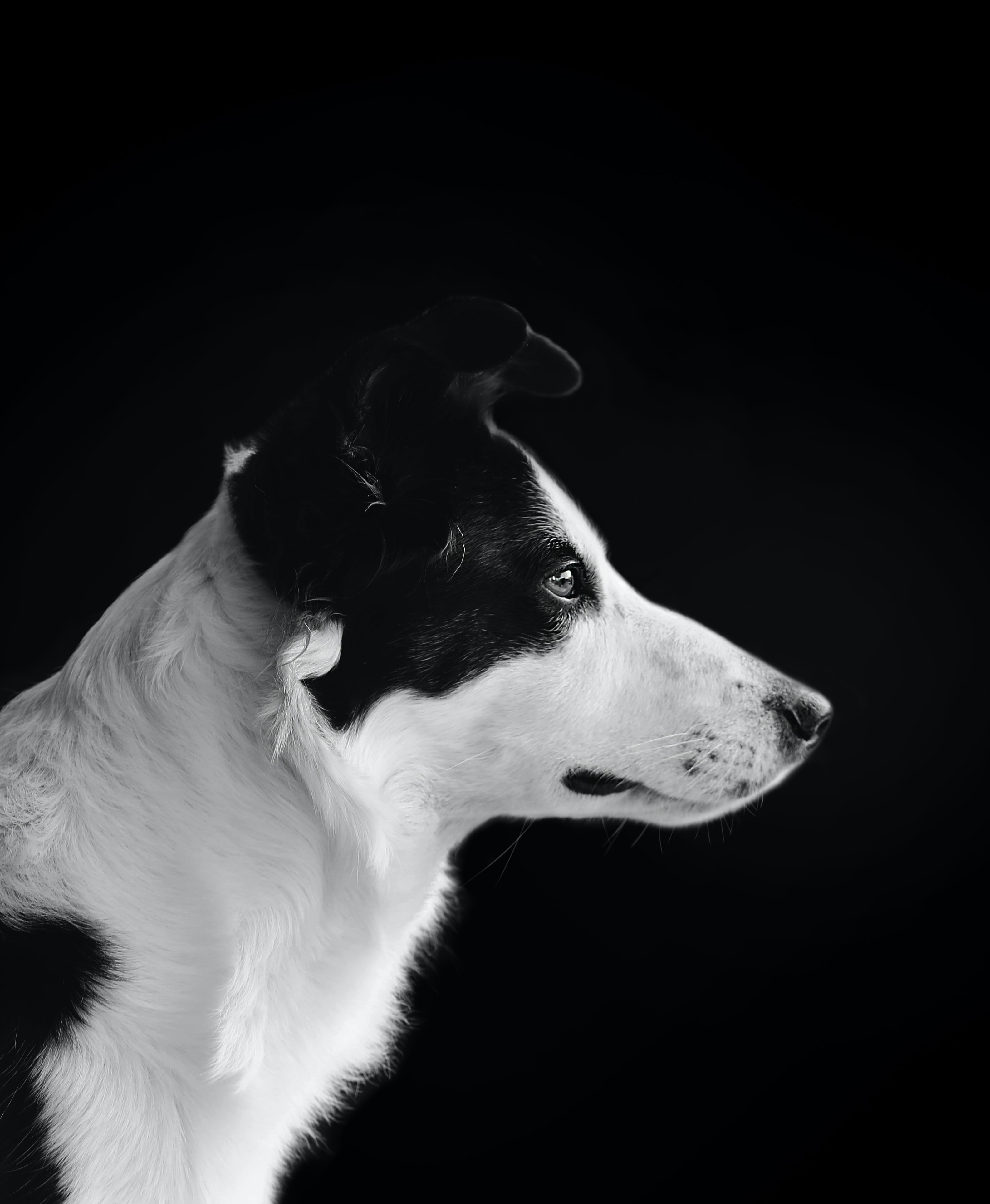 black and white shot of a dog portrait