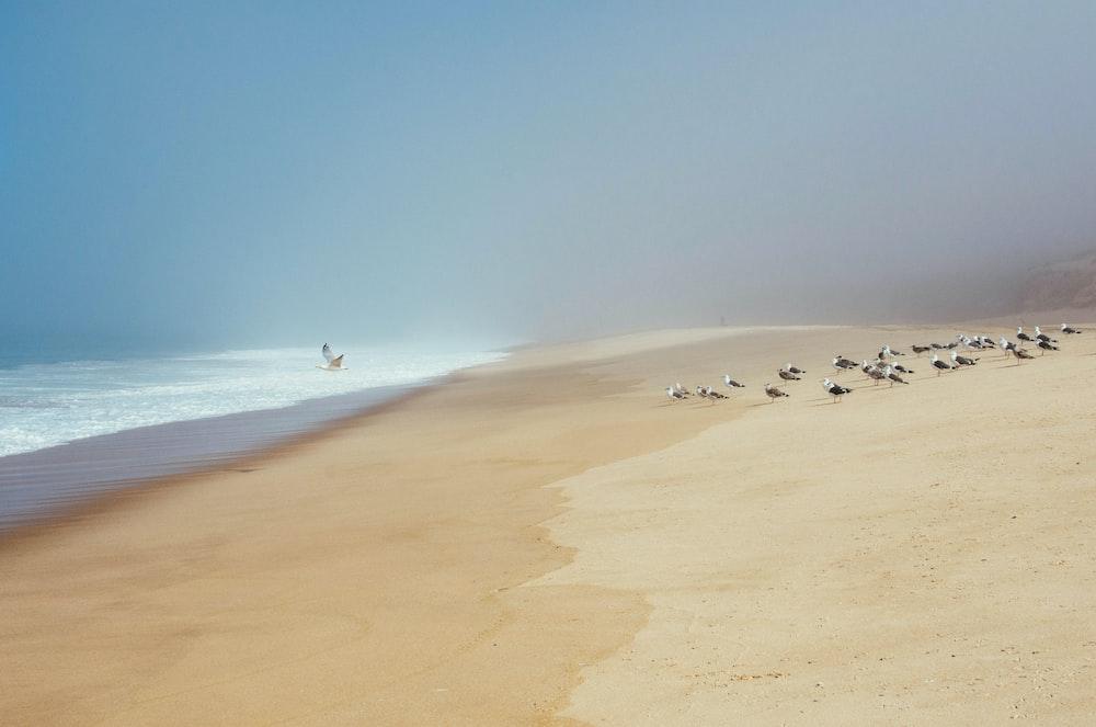 flock of birds walking on beach shore